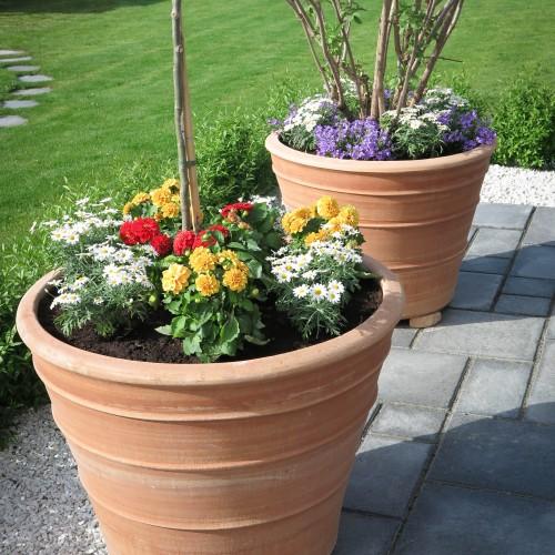 I dessa frostsäkra terrakottakrukor har en Maakia amurensis och en fläderbuske (Sambukus nigra) planterats. Runt dessa frodas Murklocka, Margarita och Dahlia. Tillsammans i de mäktiga krukorna skapar de ett fantastisk blickfång i trädgården!