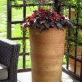 Höga krukor som Olympos får upp växterna till behaglig höjd i ett uterum eller orangeri.