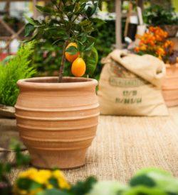 Stor trädgårdskruka som klarar att stå ute året runt. Krukorna är frosttåliga. Terrakottakrukorna är hårdbrända.