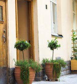 Krukor för offentliga miljöer. Handgjorda krukor från Kreta. Krukorna är frosttåliga och är av allra högsta kvalitet.