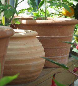 Små krukor för odling av chili. Blomkrukor som andas är det bästa för plantorna.