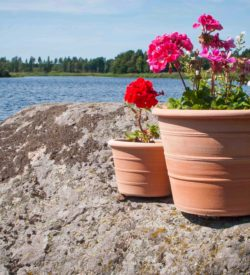 Blomkrukor av terrakotta. Terrakottakrukor.