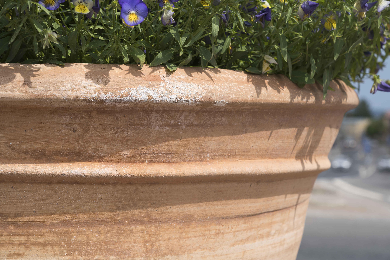 """Kruka i smidesställning är en unik design. Detta är speciallösning som vi tagit fram åt kunden tillsammans med en lokal smed i Uppsala. Ställningen är gjord av en rund järnstolpe med ett """"ankare"""" i botten. Upptill är stolpen fastsvetsad i en fyrkantig överliggare som tillsammans bildar ett """"T"""". På detta """"T"""" vilar krukan men för att hålla den på plats så löper ett järnband upp längs sidan på krukan och så ett till som går rund krukan nära dess kant men som inte täcker kanten. Konstruktionen som är mycket rejäl målades svart innan den fördes ner drygt en halvmeter ned i jorden där man förberett med jordfuktad betong som härdade långsamt."""